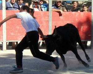 A novice goes for the bull's ribbon at the course Camarguaise
