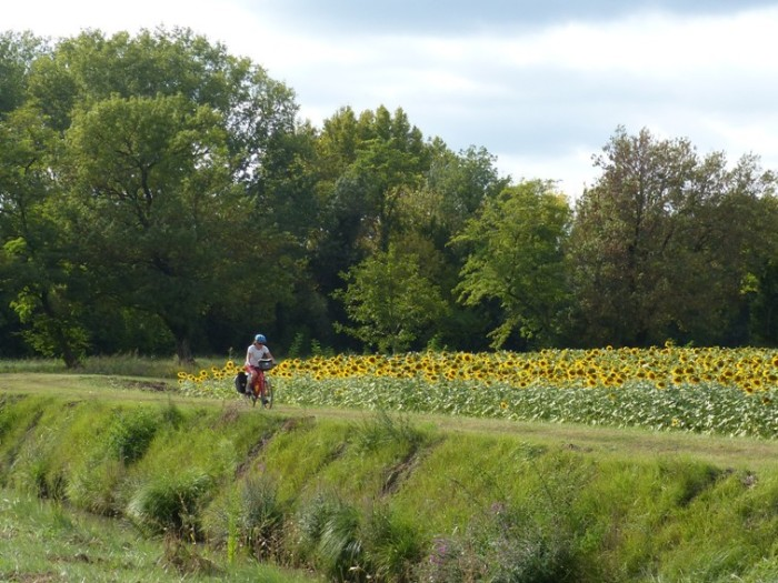 Cycling past sunflower field, Provence