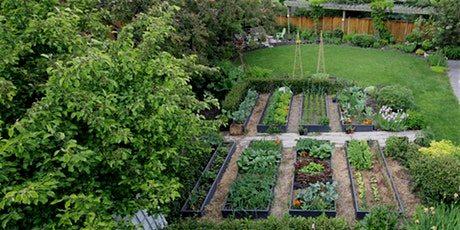 Urban Farm School garden